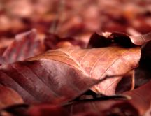 Fantastic season - autumn symbol the carpet of leaves