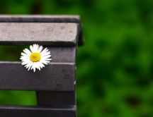 Beautiful daisy flower on a bench in the park
