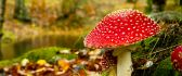 Poisonous red mushroom in the forest - autumn time