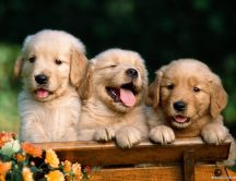 Three sweet brothers - funny little dogs
