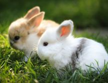 Sweet little bunnies in the garden - HD wallpaper
