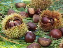 Delicious autumn fruits - chestnuts