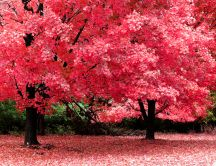 Beautiful trees with pink leaves - nature HD wallpaper