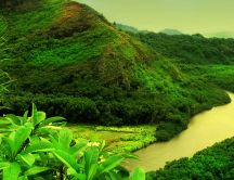 Beautiful green nature - mountain river