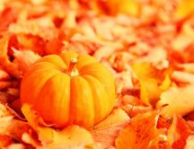 Pumpkin on a leaves carpet - HD autumn wallpaper