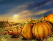 Pumpkins on a field - autumn picture