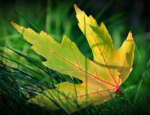 The life of a leaf - beautiful part of nature