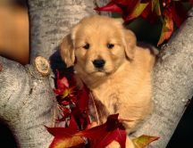 Sweet little puppy on a tree - HD wallpaper