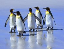 Five little penguins of the ice - HD wallpaper