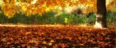 Beautiful autumn carpet - HD nature wallpaper
