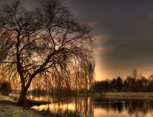 Beautiful tree in the morning light - HD wallpaper