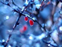 Frozen fruits - the real face of winter