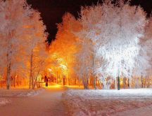 Magic night in the park - the nature is white