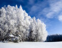 White trees - beautiful winter moments
