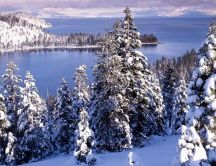Beautiful winter landscape - white forest and cold water