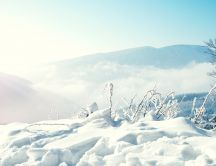 Beautiful white nature - sunlight over the snow
