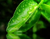 Beautiful fresh green leaf - good morning