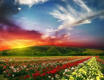 Wonderful landscape - field full of spring flowers
