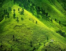 Beautiful green meadow - fresh spring air at the mountain