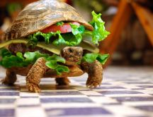 Delicious sandwich - funny turtle - abstract HD wallpaper