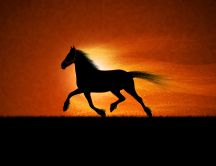 Beautiful shadow of a horse running in the night