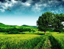 Beautiful green nature - fresh spring air