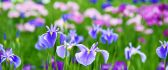 Field full of wonderful spring flowers - Macro HD wallpaper