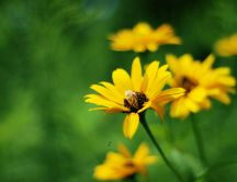 Yellow flowers on a green background - HD wallpaper