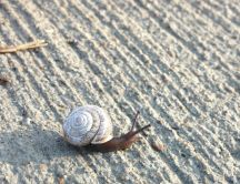 A snail on the beach - good morning sunshine