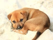Brown puppy play with sand - HD wallpaper