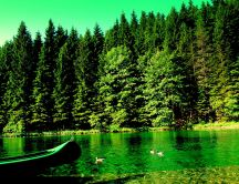 Green light - nature and lake