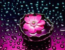 Pink flower in the water - artistic wallpaper