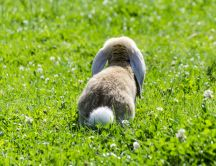 Funny bunny tail - beautiful animal playing in the grass
