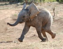 Happy little elephant - discover the world