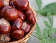 Delicious chestnuts - the autum's fruits