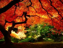 Summer or autumn - HD nature wallpaper