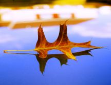 An autumn leaf on a blue mirror - HD wallpaper