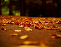 Beautiful autumn cover - hundreds of leaves on the path