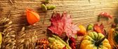 Corn, pumpkins and other miracles of autum season