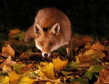 Brown foxy in the forest - beautiful HD wallpaper