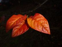 Three beautiful autumn leaves in the night