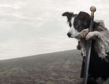 King dog - funny wallpaper- winter is coming