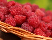 Fresh raspberries - HD Macro wallpaper
