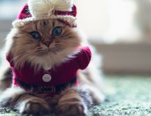 Christmas costume for cats - HD funny winter wallpaper