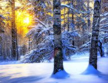 Sun through the snowy trees - HD wallpaper
