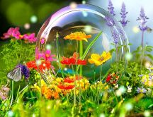 Big bubble soap in the garden -colourful flowers and insects