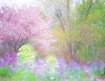 The magic of spring - beautiful colours