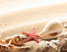 Shells and starfish in the golden sand - Summer time