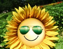 Funny wallpaper - Sunflower with sunglasses