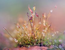 Morning dew on the beautiful spring flowers